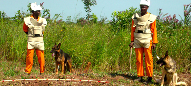 Handlers preparing their dogs before checking the areas prepared by the Mulcher